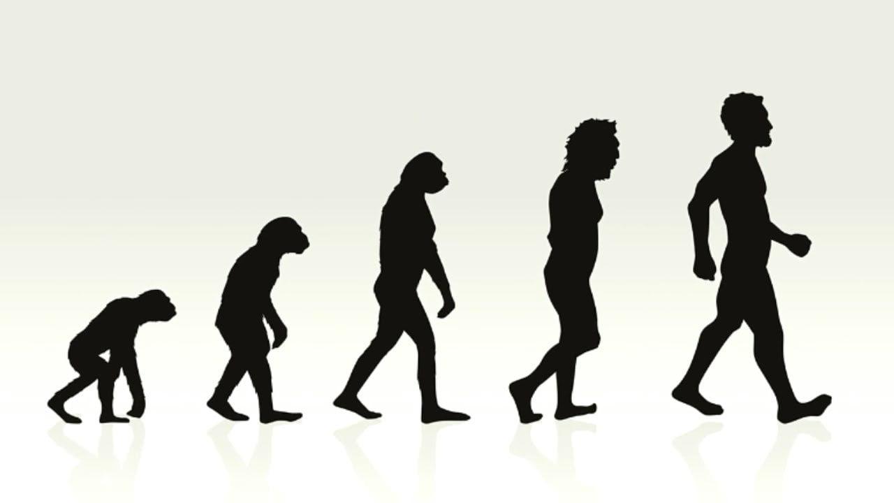 Evrim Teorisinin Çöküşü